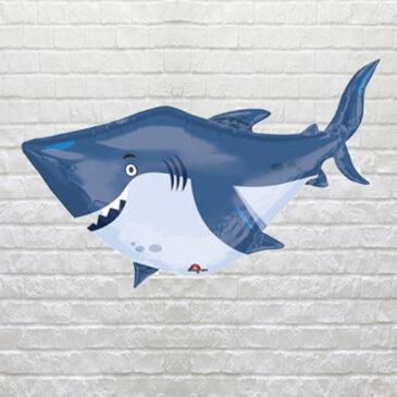 Buddies Shark